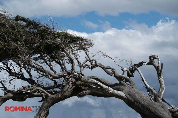 Slanted Ancient Tree