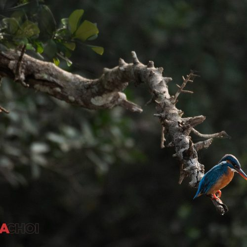 The Arboreal Bird