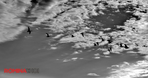 BW Birds in the Sky