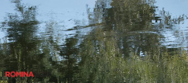 Reflections on the Riverbank