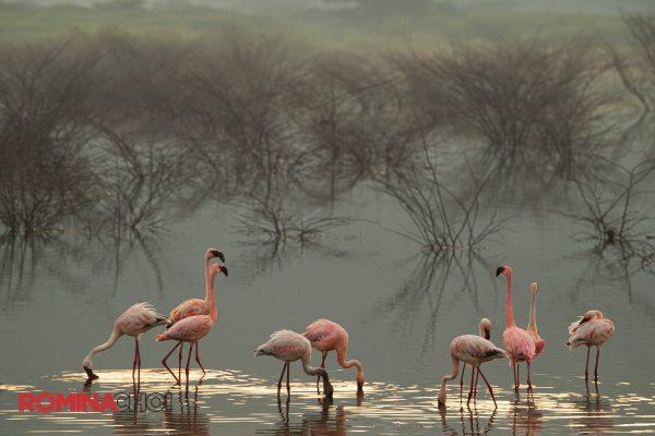 Serene Flamingos