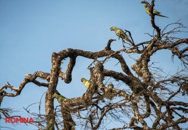 Birds in a Dead Tree