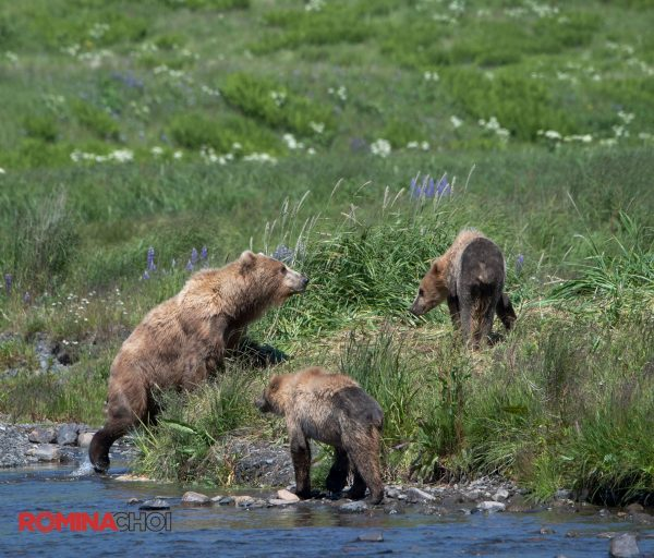 Bears in the Riverbank