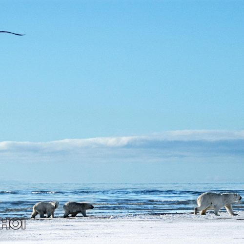 Bear Family at the Sea