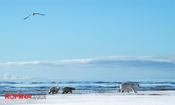 Bear Family at the Sea