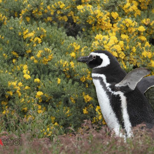 Penguin in the Flower Field
