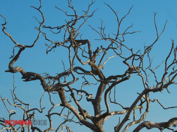 Bead Tree Branches