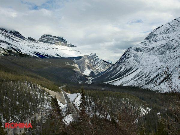 Cold Forest Landscape