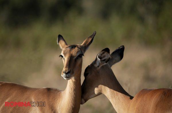 Two Deers