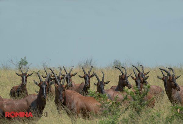 The Gazelles