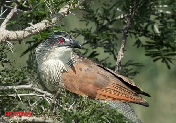 The Little Sparrow