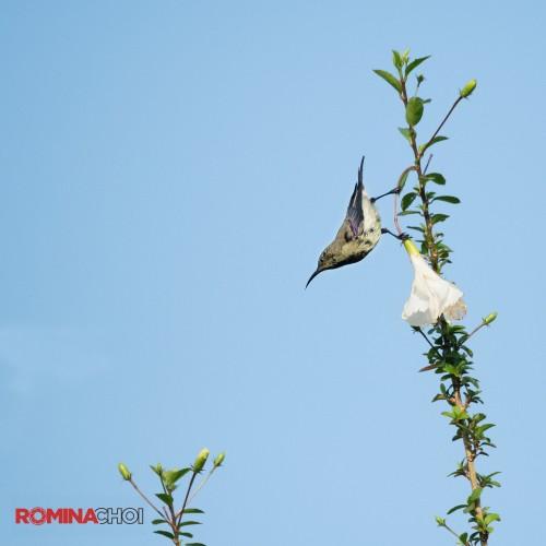 Bird in a Flower