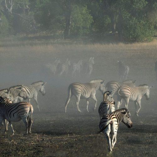 A Zeal of Zebra
